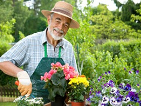 Gardening Or Horticulture